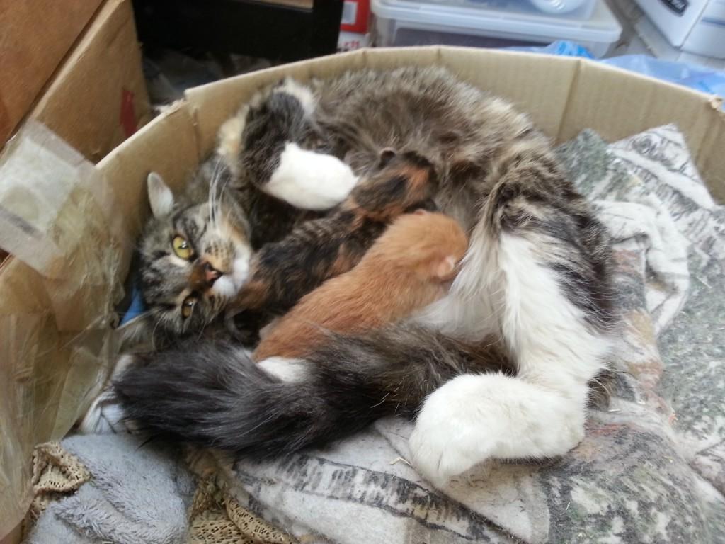 fat cat minion ffxiv